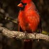 Mr Cardinal's portrait